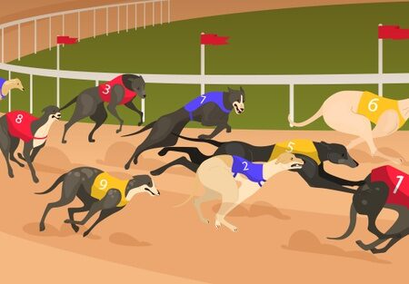 Greyhound Betting – Best tips for dog racing